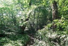 Mallinson Wood