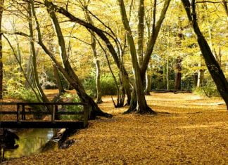 Epping Forest - Great Sale Wood - Highams Park